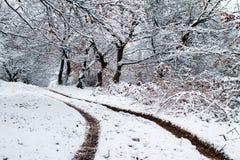 Пейзаж зимы Стоковые Изображения