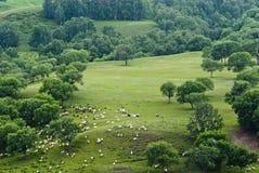 Пейзаж злаковика Bashang Стоковая Фотография RF