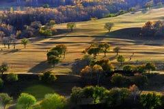 Пейзаж злаковика Китая Bashang Стоковое Изображение RF
