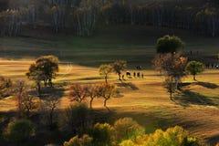 Пейзаж злаковика Китая Bashang Стоковая Фотография RF