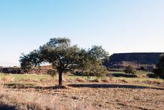 Пейзаж Кипра, ландшафт в Кипре Европы, и поля оливкового дерева Стоковое Изображение RF