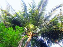 пейзаж кокосовой пальмы Стоковое Изображение RF
