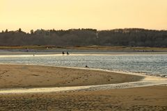 пейзаж крана пляжа идилличный стоковое изображение rf