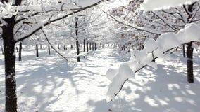 Пейзаж леса зимы видеоматериал