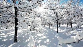 Пейзаж леса зимы сток-видео