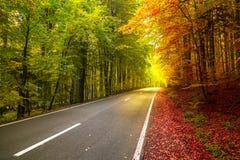Пейзаж леса осени с лучами теплый светлый загораться стоковое фото