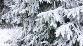 Пейзаж леса Snowy в горах назначения Winterberg, Sauerland, Германии, популярных и красивых перемещения сток-видео