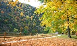 пейзаж листва стоковые изображения rf