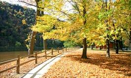 пейзаж листва стоковая фотография