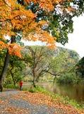 пейзаж листва стоковые изображения