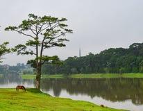 Пейзаж озера в Dalat, Вьетнаме Стоковые Изображения RF
