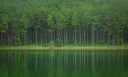 Пейзаж озера в Dalat, Вьетнаме Стоковое Изображение RF
