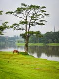 Пейзаж озера на лете в Dalat, Вьетнаме Стоковые Изображения