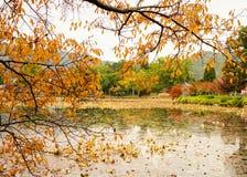 Пейзаж озера на осени стоковые изображения rf