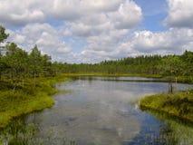 пейзаж озера Стоковое Фото