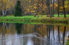 Пейзаж осени в Санкт-Петербурге, России Стоковая Фотография RF