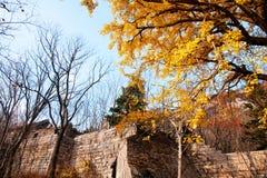 Пейзаж осени горы Laoshan красивый Китая стоковые фотографии rf