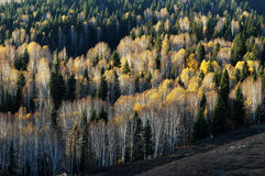 пейзаж осени золотистый стоковая фотография