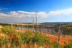Пейзаж осени Монтаны стоковые фото