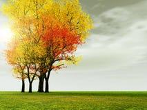 пейзаж осени Стоковые Изображения