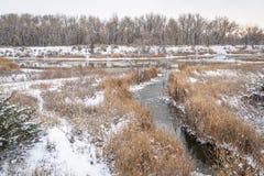 пейзаж падения или зимы заболоченных мест в Колорадо стоковое фото rf