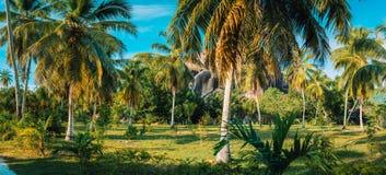 Пейзаж панорамы рощи ладони в плантации кокоса против утесов гранита и голубом небе в l имуществе соединения на Ла Digue стоковое фото