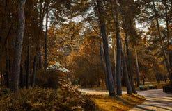 Пейзаж парка осени Стоковые Фото