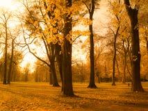 Пейзаж парка осени Стоковые Изображения RF