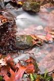 Пейзаж падения в лесе при река шелковистой сатинировки мягкое пропуская в долгой выдержке Стоковая Фотография RF