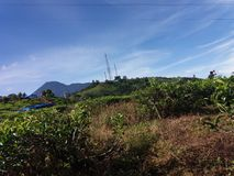 Пейзаж плантации чая в Bogor, Индонезии стоковая фотография rf