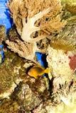 пейзаж подводный Стоковые Изображения RF