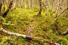 Пейзаж пола леса стоковое фото