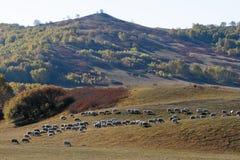 Пейзаж прерии Внутренней Монголии Стоковое фото RF