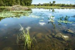 Пейзаж природы на реке Des Milles Iles стоковое изображение rf
