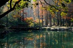 Пейзаж природного парка, Ханчжоу Стоковая Фотография RF