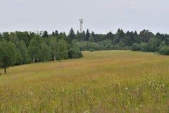 Пейзаж природы леса и неба стоковые изображения rf