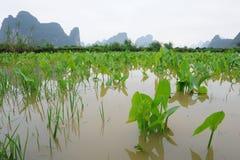 пейзаж провинции karst guangxi фарфора Стоковые Изображения RF
