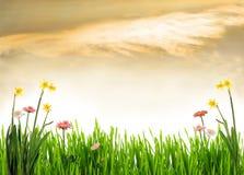 пейзаж сада Стоковое Изображение