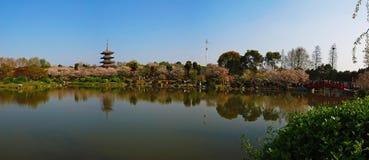 Пейзаж сада Сакуры Стоковая Фотография RF