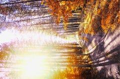 Пейзаж следа осени стоковая фотография