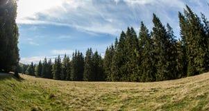Пейзаж соснового леса Стоковое Фото