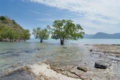 Пейзаж с деревьями и островами стоковая фотография