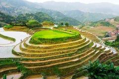 Пейзаж террасного поля риса сногсшибательный стоковая фотография