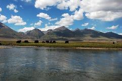 пейзаж Тибет Стоковое Изображение