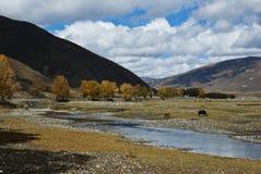 пейзаж Тибет qinghai плато Стоковая Фотография RF