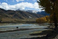 пейзаж Тибет qinghai плато Стоковая Фотография