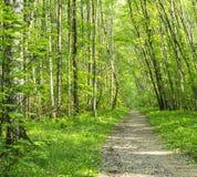 Пейзаж тропы леса на солнечный летний день весны с деревьями и зеленым цветом травы живыми выходит на ветви на парке ботанический Стоковые Фото