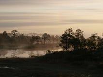 Пейзаж трясины на восходе солнца стоковые изображения rf
