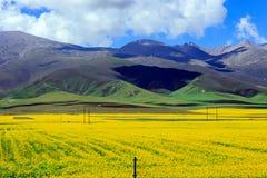 Пейзаж Цинхая Стоковое Фото
