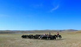 Пейзаж Цинхая Стоковое Изображение